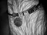 """Кожаный браслет: """"Я Медведь"""""""